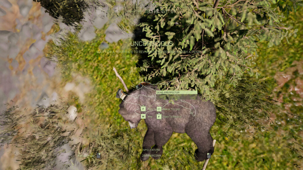 icarus bear killed player and then died