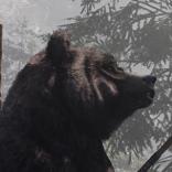 bear icarus portrait